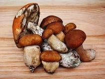 Mushrooms boletus and leccinum Stock Photos