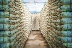Mushrooms bottle Stock Images