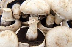 Mushrooms Royalty Free Stock Image