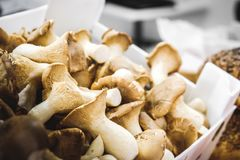 Mushrooms box closeup funghi porcini autumn.  Royalty Free Stock Images