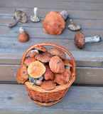 Mushrooms in brown basket on porch close-up Stock Photos