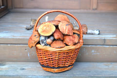 Mushrooms in brown basket on porch closeup Royalty Free Stock Images