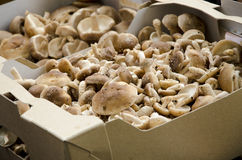 Mushrooms in a brown box. A brown box full of fresh picked mushrooms, ready for cooking stock images