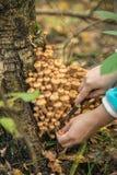 Mushrooms bunch close up stock photo