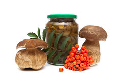 Mushrooms and a bunch of red rowan on a white background Stock Photo
