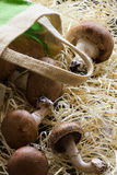 Mushrooms with canvas bag on straw Royalty Free Stock Photo