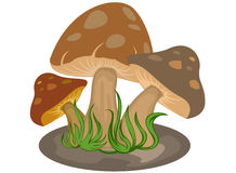 Mushrooms cartoon Royalty Free Stock Images