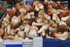 Mushrooms and cep at the greengrocery Stock Images