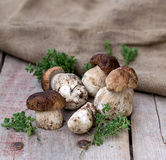 Mushrooms ceps with herbs Royalty Free Stock Photos
