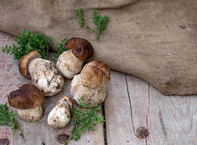 Mushrooms ceps with herbs. Copyspace above Royalty Free Stock Photos