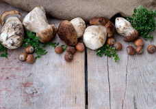 Mushrooms ceps, nuts and herbs. Copyspace above Stock Photos