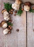 Mushrooms ceps, nuts and herbs. Copyspace above Royalty Free Stock Image