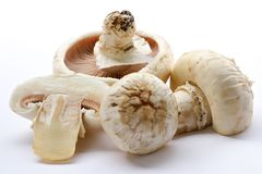Mushrooms champignons Stock Photography