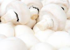 Mushrooms - champignons Stock Photos