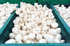 Mushrooms champignons in boxes Royalty Free Stock Photos
