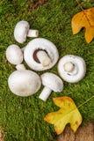 Mushrooms - champignons Stock Photo
