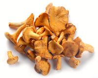 Mushrooms chanterelle Royalty Free Stock Photos