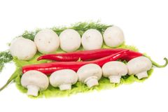 Mushrooms and chili peppers on a green background Stock Photo