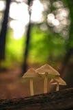 Mushrooms close up Stock Photos