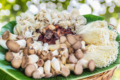 Mushrooms. Close up of an assortment of mushrooms on banana leaf Royalty Free Stock Photo
