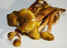 Mushrooms, close up royalty free stock images