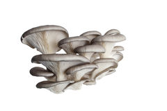 Mushrooms close up isolated. Mushrooms  close up isolated on white background Royalty Free Stock Photo