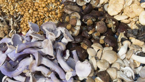 Mushrooms in close-up. Several mushrooms on the market Stock Image