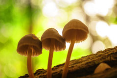 Mushrooms close up Stock Images
