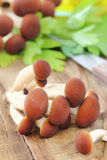 Mushrooms. Clump or tuft of edible agrocybe aegerita on a rustic wooden kitchen table Royalty Free Stock Images