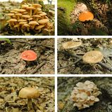 Mushrooms collage Stock Images