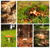 Mushrooms collage Royalty Free Stock Photo