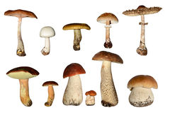 Mushrooms collection Royalty Free Stock Photography