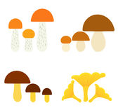 Mushrooms collection Stock Image