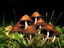 Mushrooms colony Stock Photos