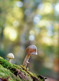 Mushrooms and colors Stock Images