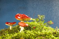 Mushrooms on the forest litter. Mushrooms in the composition relating to forest fleece Stock Photos