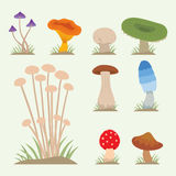 Mushrooms for cook food and poisonous nature meal vegetarian healthy autumn edible and fungus organic vegetable raw Royalty Free Stock Photography