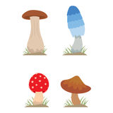 Mushrooms for cook food and poisonous nature meal vegetarian healthy autumn edible and fungus organic vegetable raw. Ingredient vector illustration. Gourmet Royalty Free Stock Photo