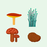 Mushrooms for cook food and poisonous nature meal vegetarian healthy autumn edible and fungus organic vegetable raw. Ingredient vector illustration. Gourmet Royalty Free Stock Image