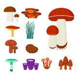 Mushrooms for cook food and poisonous nature meal vegetarian healthy autumn edible and fungus organic vegetable raw. Ingredient vector illustration. Gourmet Stock Images
