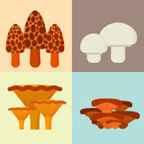 Mushrooms for cook food and poisonous nature meal vegetarian healthy autumn edible and fungus organic vegetable raw. Ingredient vector illustration. Gourmet Stock Photos