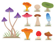 Mushrooms for cook food and poisonous nature meal vegetarian healthy autumn edible and fungus organic vegetable raw. Ingredient vector illustration. Gourmet Royalty Free Stock Images