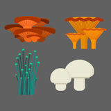 Mushrooms for cook food and poisonous nature meal vegetarian healthy autumn edible and fungus organic vegetable raw. Ingredient vector illustration. Gourmet Stock Image