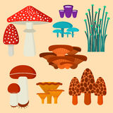 Mushrooms for cook food and poisonous nature meal vegetarian healthy autumn edible and fungus organic vegetable raw Royalty Free Stock Image