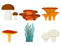 Mushrooms for cook food and poisonous nature meal vegetarian healthy autumn edible and fungus organic vegetable raw Royalty Free Stock Photos