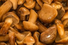 Mushrooms. Cooking of forest mushrooms. stock photos