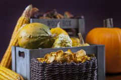 Mushrooms, corn and pumpkin Royalty Free Stock Image