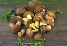 Mushrooms on dark table Royalty Free Stock Photography