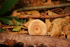 Mushrooms on decay wood Royalty Free Stock Images