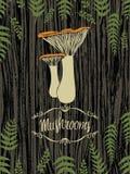 Mushrooms design card Royalty Free Stock Photos